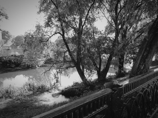 Tree Bridge - Man Made Structure Outdoors Water Day Nature Growth Architecture Built Structure No People Building Exterior Sky Beauty In Nature City Russia Belgorod