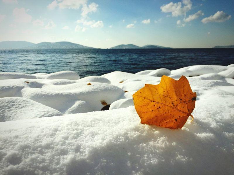 Istanbul Turkey Kartal Snow ❄ Marmara Sea Princess Island Silvester 2015 Yelow Leaves