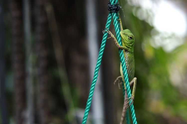 Close-up of lizard on rope