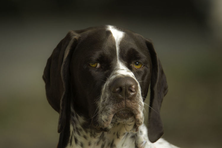 Portrait of dog looking at camera