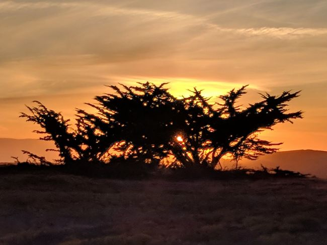 EyEmNewHere Sunset Tree Silhouette Landscape Nature Dusk Scenics