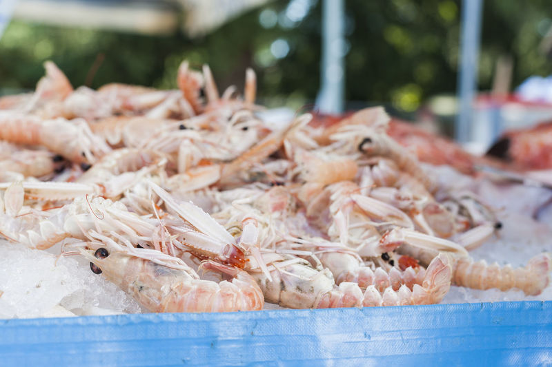 Close-up of seafood for sale at market stall