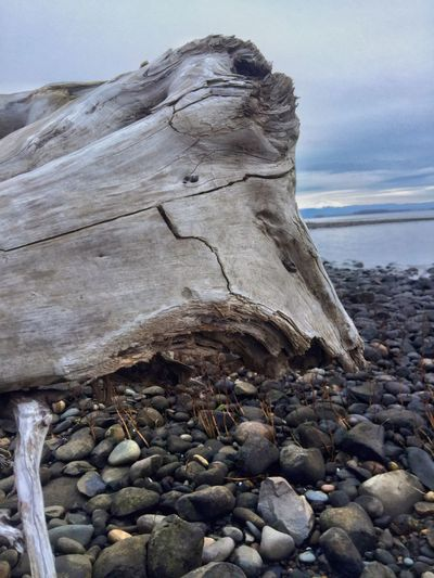Faces In Nature I See Faces Scenery Shapes And Forms Driftwood Land Rock Solid Beach Water Sea Sky Rock - Object Nature Beauty In Nature Tranquil Scene Outdoors Scenics - Nature Pebble Stone - Object Day Tranquility Cloud - Sky No People