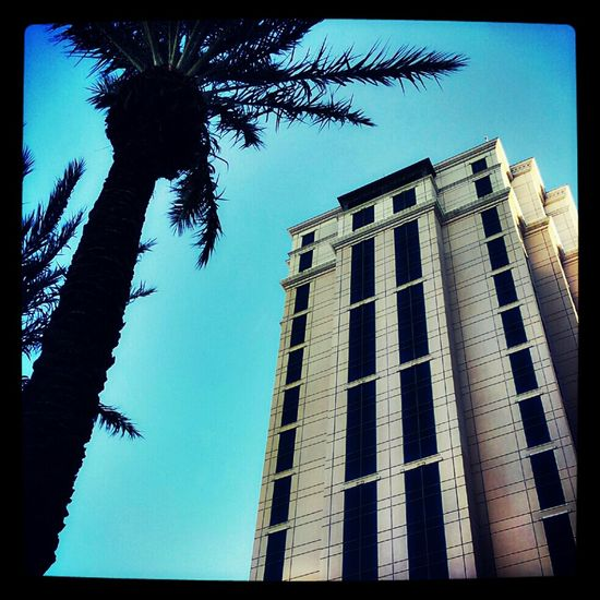 Streetphotography Sky Taking Photos Blue Building Photography Palm Trees Louisiana Jus Because