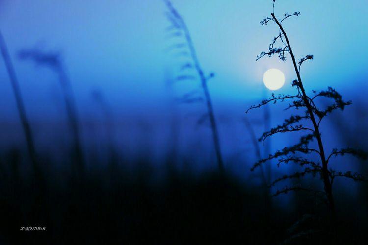 Fullmoon Flowercandy Photoshoot Night Photography Z-KO PICS Cobalt Blue By Motorola