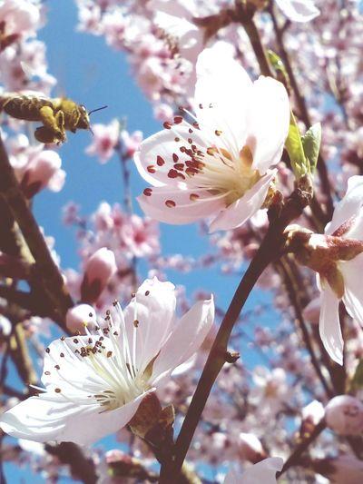 Peach Blossom 2 & Bee 🐝 Fresh Honey