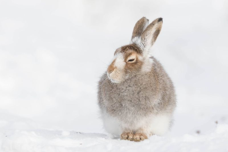 Close-Up Of Cute Rabbit On Snow