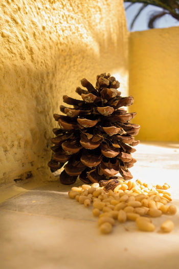 Koukounaria seeds (pine nuts) Acorn Paint The Town Yellow Conifer Yield Delicacies Delicacy Food Food And Drink Freshness Healthy Eating Ingredient Koukounaria Koukounaria Seeds Pine Nut Pine Nuts Pine Seeds Pinecone Stack Still Life Yellow