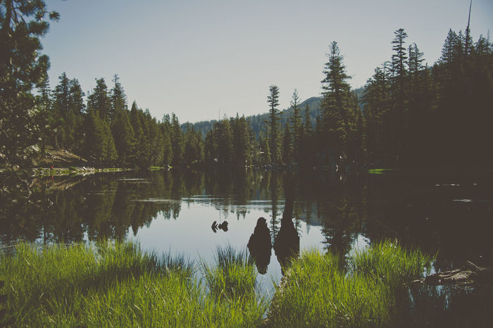 Backgrounds Day Forest Lake Landscape Natural Parkland Nature Nature Reserve No People Outdoors Pine Woodland Reflection Reflection Lake Scenics Sky Sunset Tourism Travel Tree Vacations Water Best EyeEm Shot Best EyeEm Nature Best Eyeem Photo Best Eyeem Shots