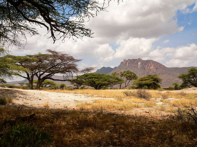 Shaba National Reserve in Northern Kenya Kenya National Park The Week On EyeEm Africa Beauty In Nature Cloud - Sky Day Grass Growth Landscape Mountain Nature No People Outdoors Safari Scenics Sky Tranquil Scene Tranquility Travel Destinations Tree