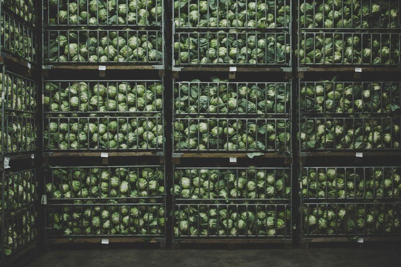 Full frame shot of cabbages in shelves at warehouse