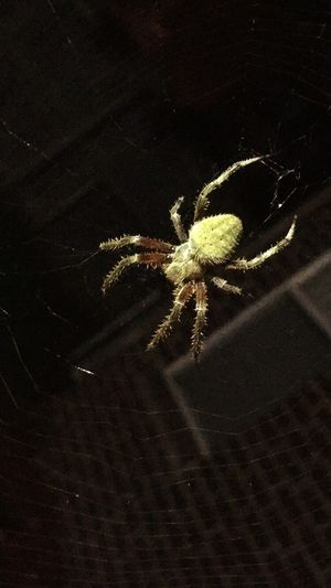 Close-up Nature Beauty In Nature Arachnid