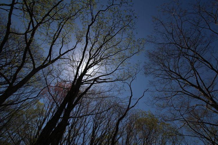 今日は青空って気持ち良い~って本気で思った😆 From My Point Of View Beauty In Nature Nature Photography Nature EyeEm Gallery EyeEm Nature Lover Enjoying Life EyeEm Best Shots Noedit Nofilter 明日もお願い~😆OTKSM😁