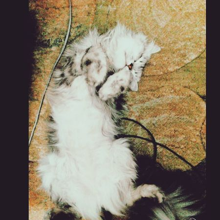 Cats Of EyeEm Cat♡ Spontaniouscaptures My Babe <3 Sleeping Cat
