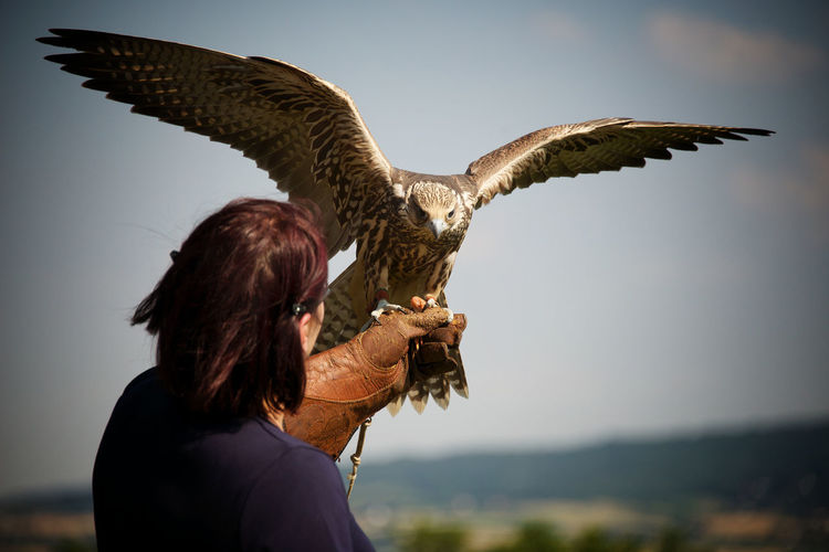 Woman holding hawk