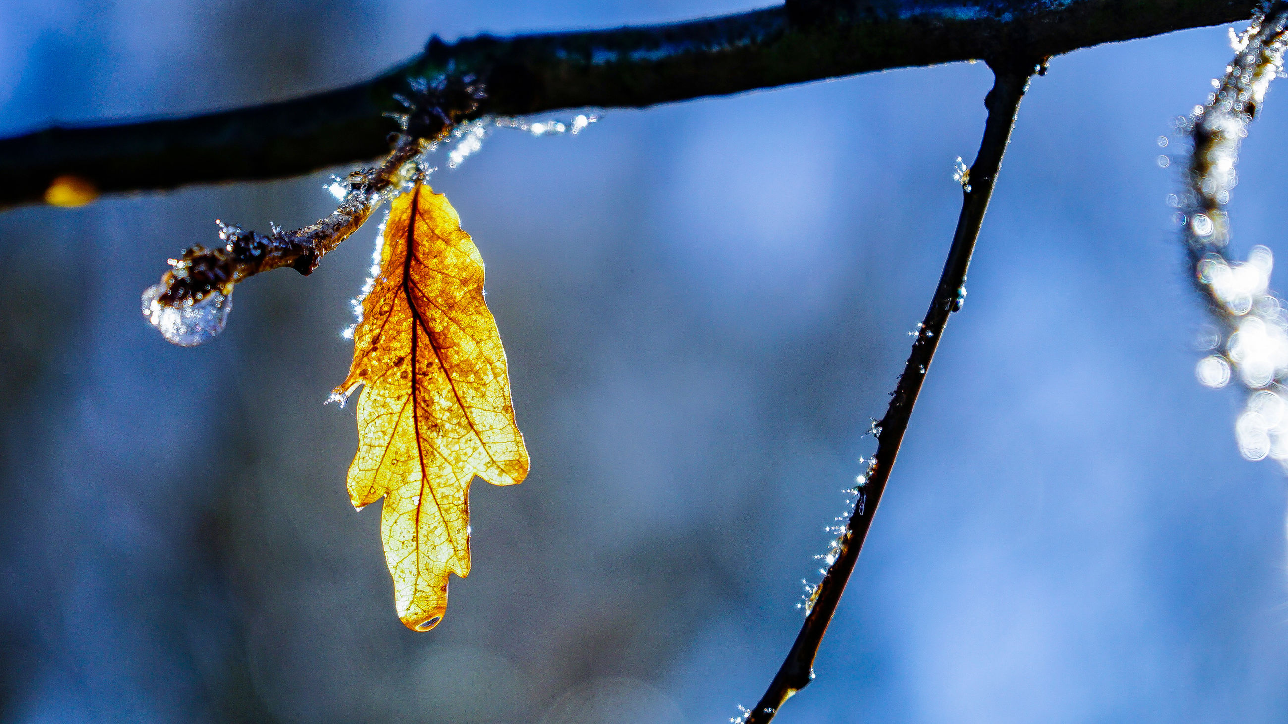 cold temperature, winter, nature, beauty in nature, catkin, frozen, weather, hanging, focus on foreground, snow, outdoors, ice, no people, day, twig, branch, tree, close-up, fragility, sky