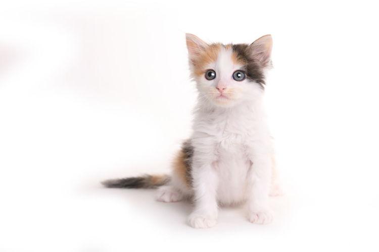 Portrait of kitten on white background