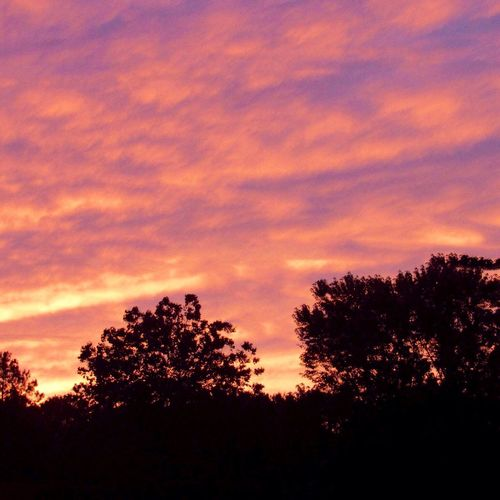 Dramatic sunset tonight 🤗 Tree Silhouette Sunset Beauty In Nature Cloud - Sky Dusk Tranquil Scene Idyllic Dramatic Sky Scenics - Nature Low Angle View