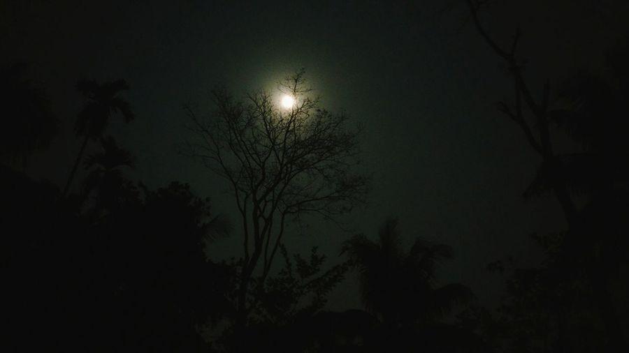 FullMoonLight Night Moon Sky Tree Branch Nature Nightphotography Fullmoon At The Sky Fullmoonlastmidnight Nightsky Stars Trees Nightsky Night Shot