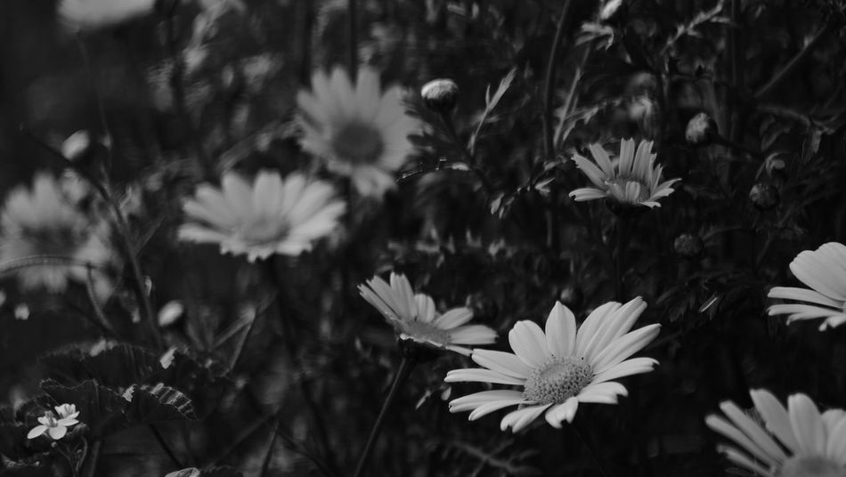 Flower Plant Nature First Eyeem Photo B&w Photography Fujifilm X-e1 EyeEmNewHere Nature Carl Zeiss Jena Carl Zeiss Jena 50mm 2.8F CarlZeiss Blackandwhite B&w Fujifilmxe1 Villajoyosa EyeEmNewHere EyeEmNewHere
