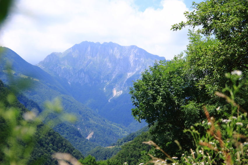 View into Triglav National Park Adventure Beauty In Nature Close Up Copy Space Day EyeEmNewHere Flower Growth Hiking Mountain Mountain Range Nature No People Outdoor Photography Outdoors Plant Scenics Sky Sky And Clouds Slovenia Sport Summer Tolmin Tree Triglav National Park