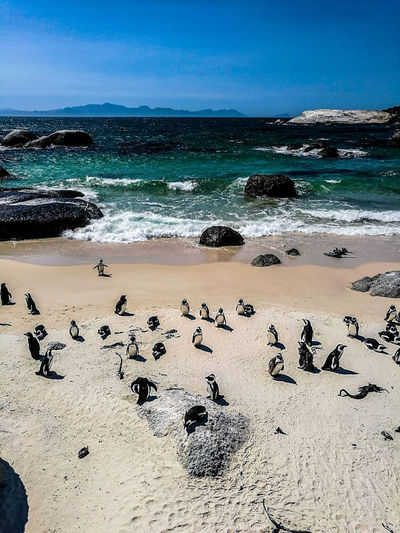 Beach Sea Large Group Of Animals High Angle View Large Group Of People Animal Themes Sand Horizon Over Water Outdoors Sky Day Nature People Boulders Beach Capetown Cape Town, South Africa
