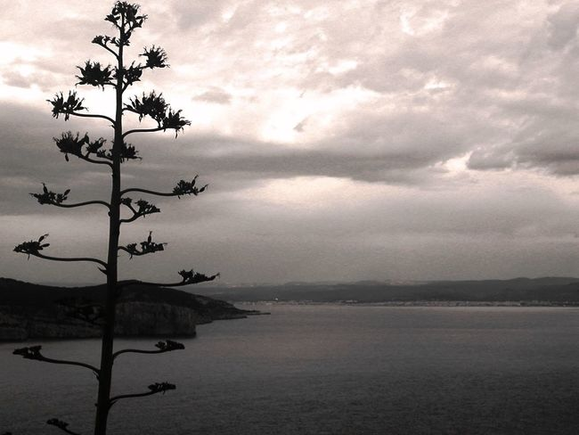 Alghero Contrast Monochrome Light And Shadow Details Sardegna Quiet Relax Seeking Inspiration Nature Landscape