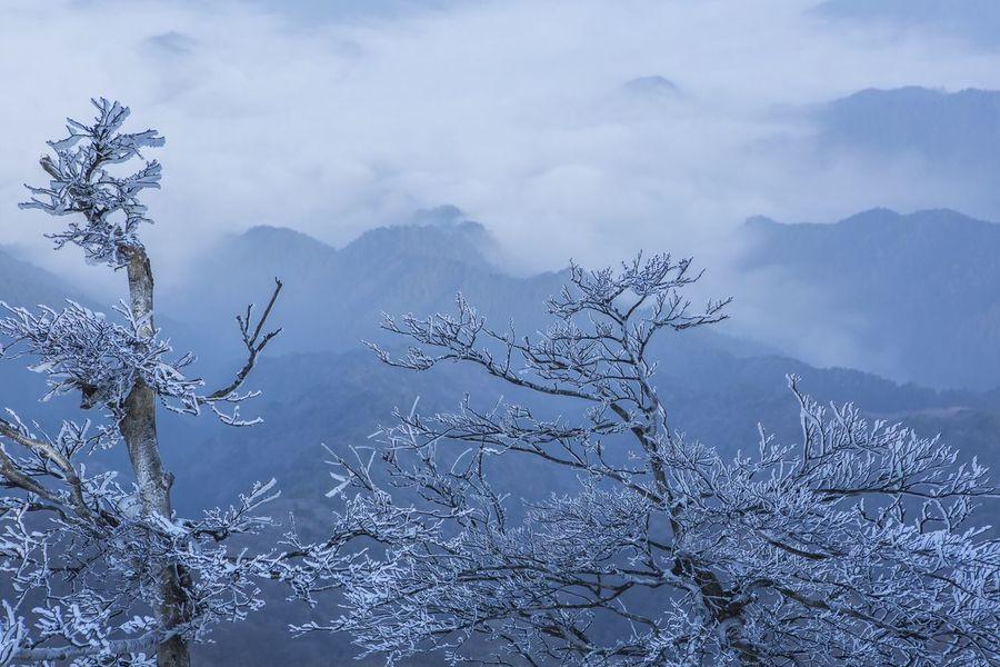 高見山 雲海 霧氷 高見山 Sea Of clouds Rime Nara