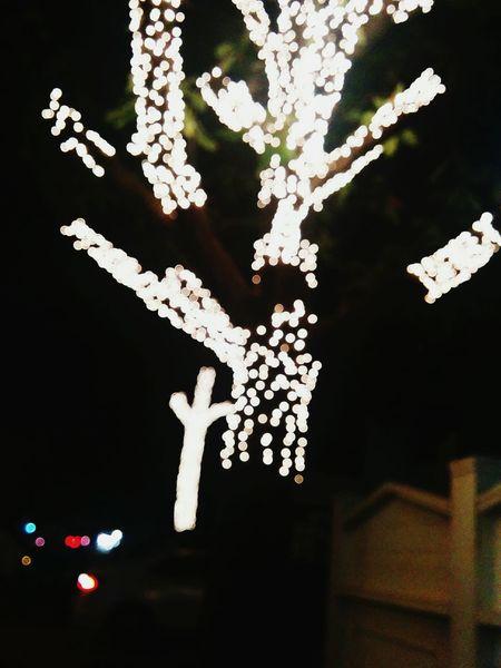 Tree Night Outdoors Illuminated Close-up Lights Bulrush Blur Blurred Background Nexus 5 Eyeem Weekend EyeEm