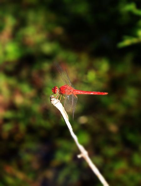Animal Animal Themes Animal Wildlife Animals In The Wild Beauty In Nature Close-up Day EyeEm Best Shots EyeEm Nature Lover Focus On Foreground Insect Nature No People One Animal Outdoors Winged