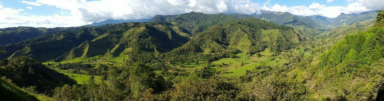 Mountain Mountain Range Cloud - Sky Nature Sky Tree Pine Tree Pinaceae Landscape Scenics Beauty In Nature Tranquility Outdoors Forest No People Vacations Day Colombia Coffee Region Salento Green Verdant Sunny