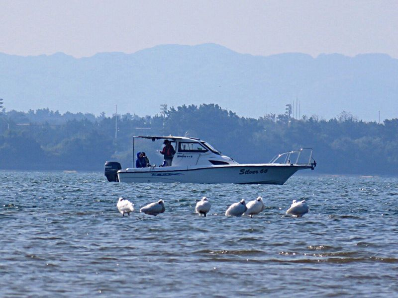 Blackfacedspoonbill Bird Bird Photography Birdwatching Ship Endangered Species Endangered  Sea 干潟の風景 クロツラヘラサギ