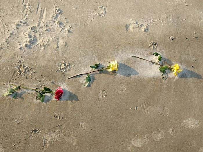 High angle view of flowering plant on sand at beach