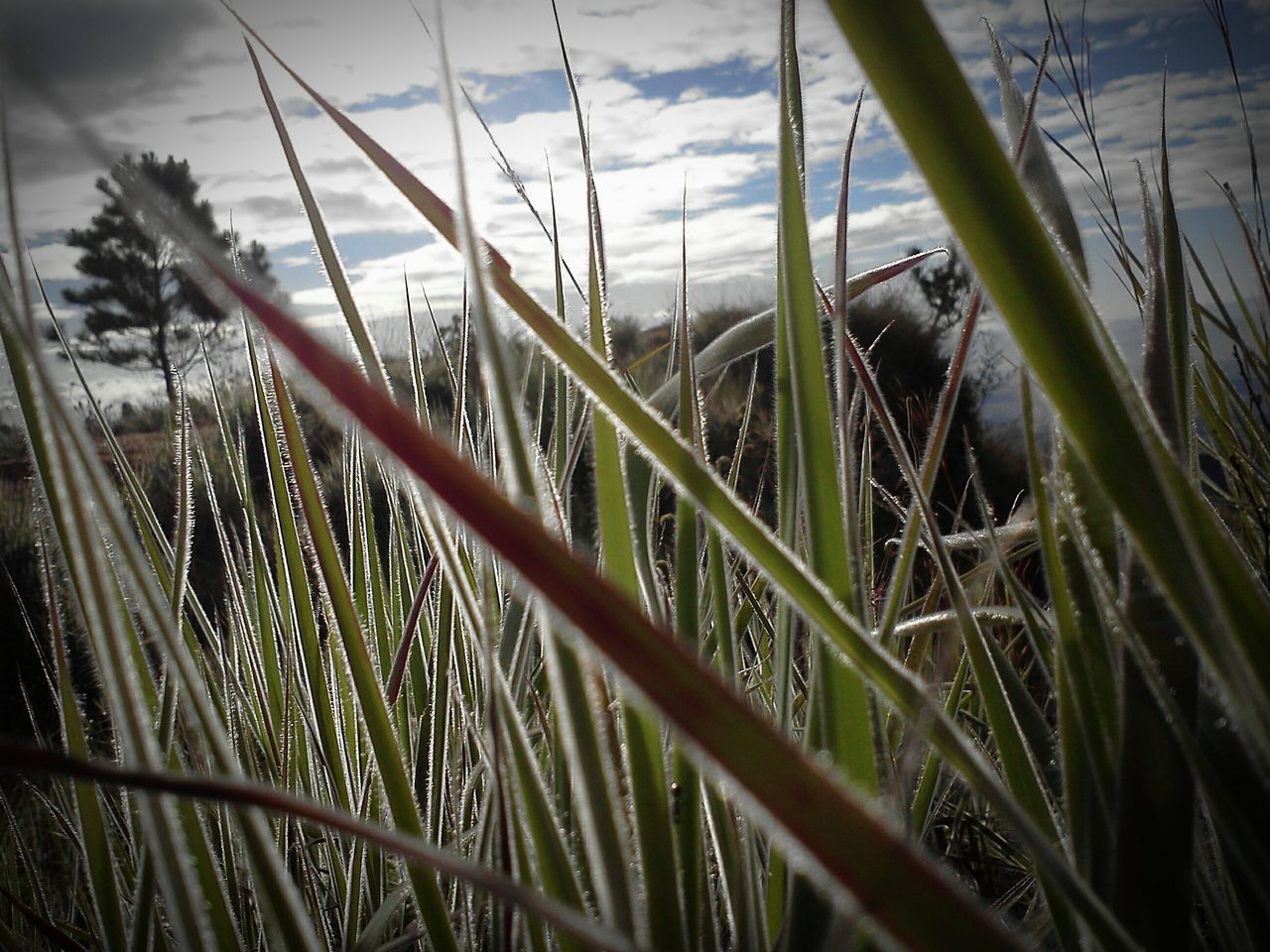 growth, grass, nature, plant, day, no people, outdoors, close-up, beauty in nature, sky