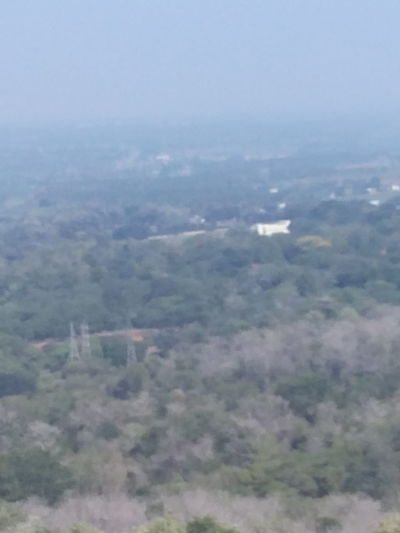 Tree Landscape Scenics No People Outdoors Aerial View Tranquil Scene