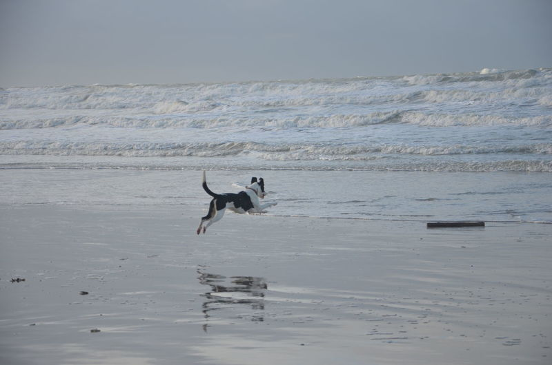 That's a nice jump! 😀 Jump Jumping Sea France Pas-de-calais Nord Beach Water Reflection Dog Water Pets Jumping No People Outdoors Nature Day Animal Themes Sky