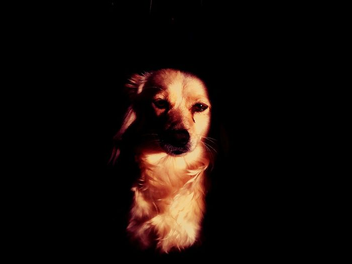 il triste cane.. Dog Black Animal Themes Animal Themes Animals In The Wild Animal Wildlife Black Background Adult Studio Shot Adults Only One Person Human Body Part Portrait Only Women Night Close-up People Young Adult One Woman Only Mammal Outdoors