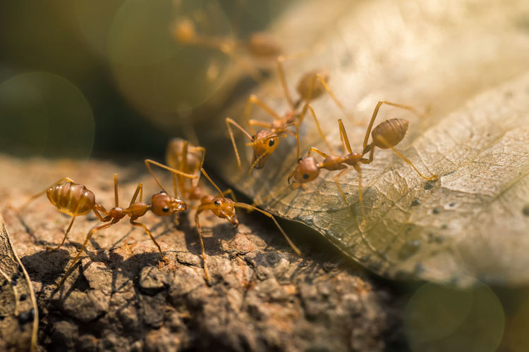 Ants are helping the wounded. Animal Animal Themes Animal Wildlife Animals In The Wild Ant Close-up Day Group Of Animals Insect Invertebrate Leaf Nature No People Outdoors Plant Plant Part Selective Focus Sunlight Wood - Material