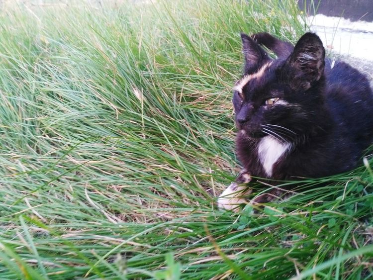 Grass One Animal Domestic Animals Animal Themes Pets Mammal Domestic Cat No People Outdoors Day Feline Nature Close-up Cats Of EyeEm Cat Green Animals In The Wild Nature Grass EyeEmNewHere Mothercat
