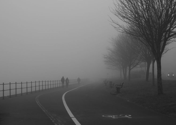 A walk in the fog Bare Tree Fog Foggy Mist Outdoors People Scenics The Way Forward Tree Walking Weather