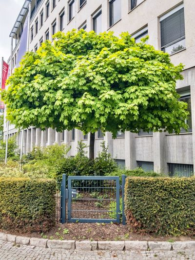 Berlin Day Springtime No People Tree Green Color Building Exterior Berlin Outdoors Plant Grass Nature City