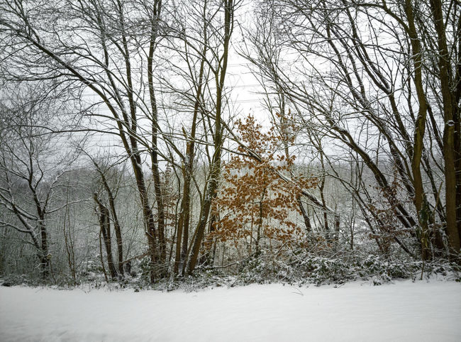 Bare Tree Beauty In Nature Blizzard Branch Cold Temperature Environment Extreme Weather Forest Land Landscape Nature No People Non-urban Scene Outdoors Plant Scenics - Nature Snow Snowing Tranquil Scene Tranquility Tree Winter WoodLand