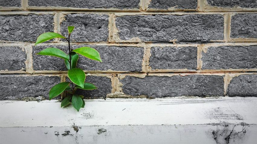 Green Leaves Concrete Wall Walking Around The City  My Smartphone Life Enjoying The View Relaxing 小清新