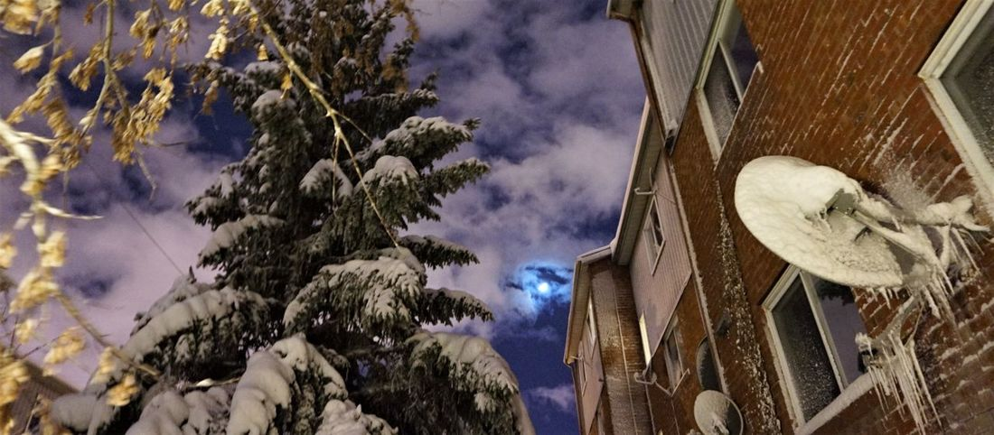 low angle view of night sky, tree and buildingBeauty In Nature Blue Moon Clouds Low Angle View Moon Nature Night No People Outdoors Sky Snow Tree Tree Winter