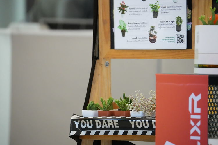 Text on potted plant against wall