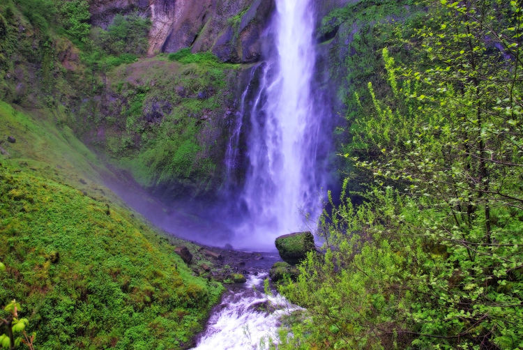 Multnomah Multnomah Falls  Multnomah Falls Oregon Oregon Beauty In Nature Blurred Motion Environment Flowing Flowing Water Foliage Forest Green Color Land Long Exposure Lush Foliage Nature No People Outdoors Plant Power Power In Nature Rainforest Scenics - Nature Water Waterfall