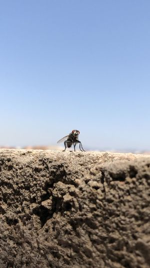 Animal Fly Land