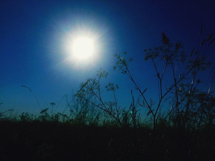 Sun Blue Tranquil Scene Plant Scenics Silhouette Beauty In Nature Low Angle View Sunlight Nature Growth Lens Flare Clear Sky Sunbeam Solitude Field Non-urban Scene Bright Outdoors First Eyeem Photo