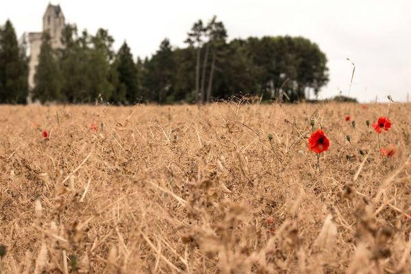 UlsterTower Ulster 36thUlsterDivision Somme Thiepval France Thiepval Lestweforget Poppy 1stofjuly