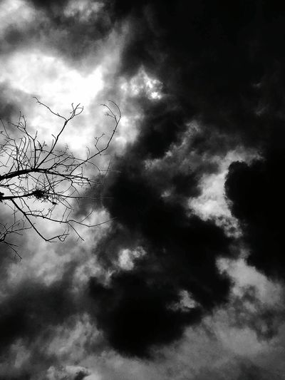 Low Angle View Cloud - Sky Sky Scenics Beauty In Nature Tranquility Branch Tranquil Scene Cloud Silhouette Nature Cloudscape Cloudy Majestic Day Outdoors Outline Growth Atmospheric Mood High Section